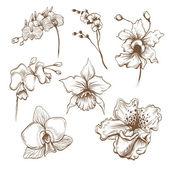 Fényképek Hand drawn orchid flowers vector set