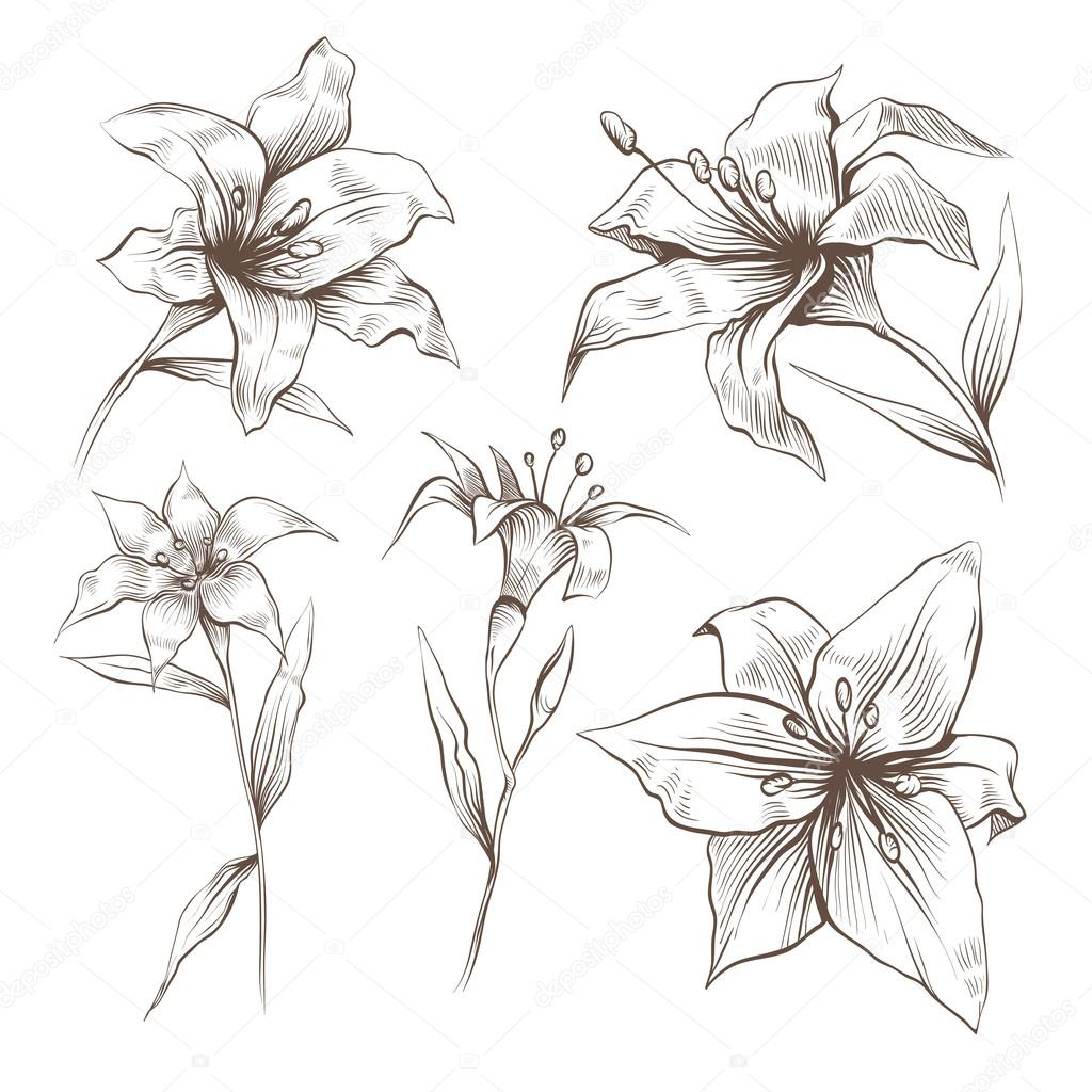 Hand drawn lilly flowers vector set