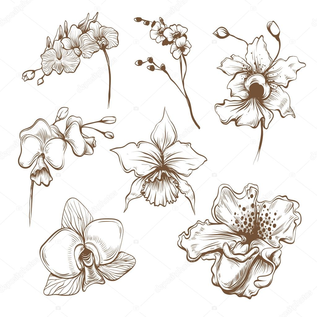 Hand drawn orchid flowers vector set