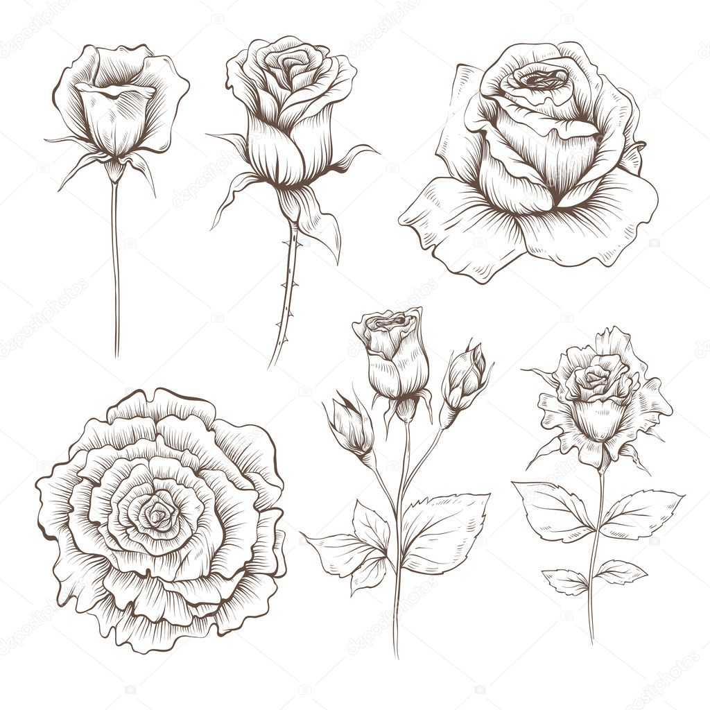 Hand drawn rose flowers vector set
