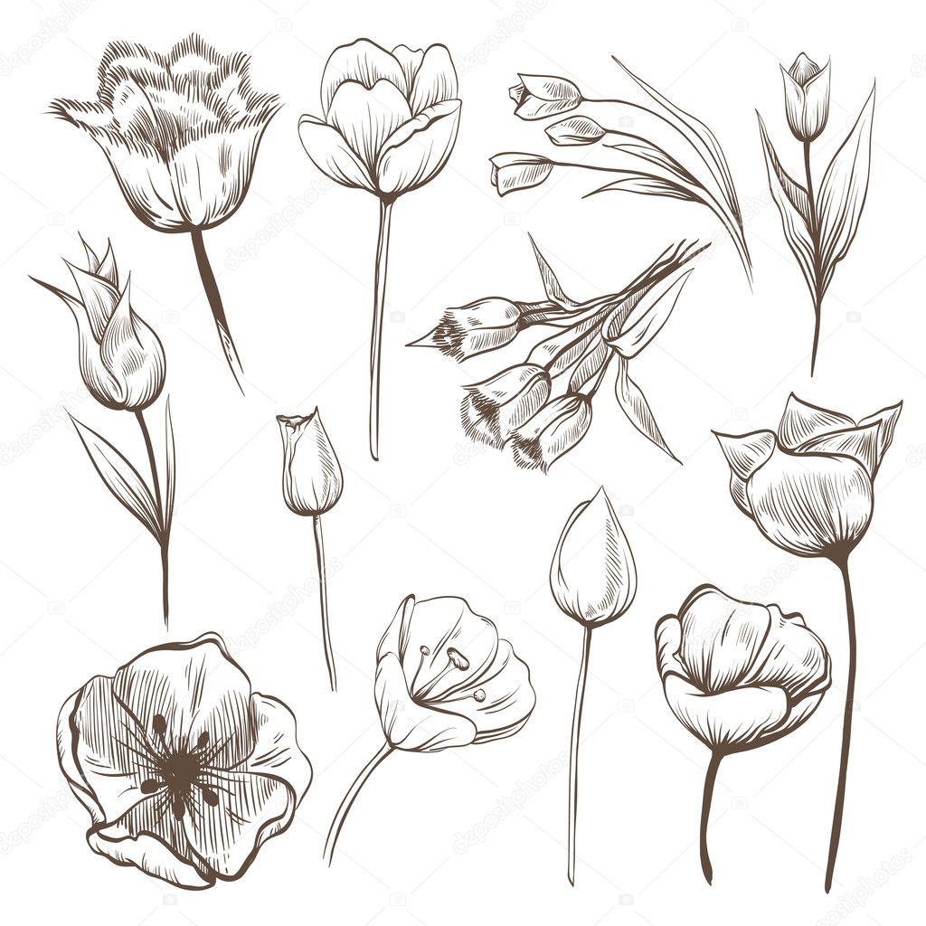 Hand drawn tulips flowers vector set