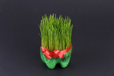 Wheat with Red Ribbon Home Grow