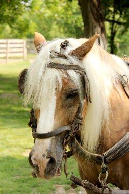 Horse's head mumbling