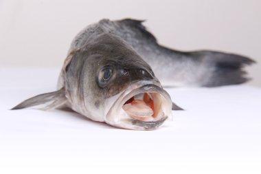 Crude cleaned fresh fish