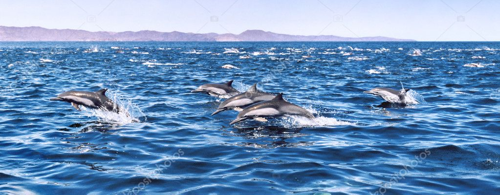 Five Jumping Dolphins