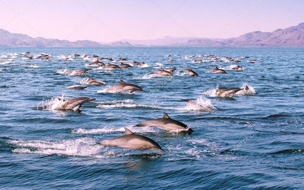 Dolphins in Motion