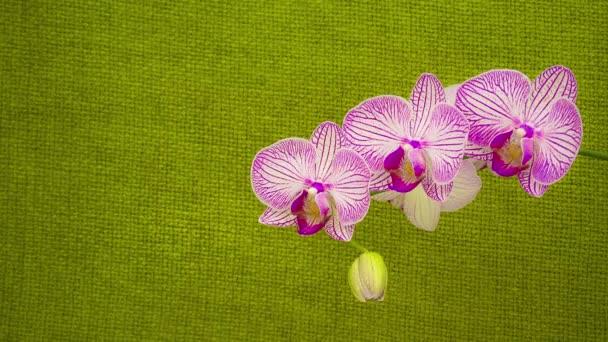 fialová orchidej rozpustit jejich květy