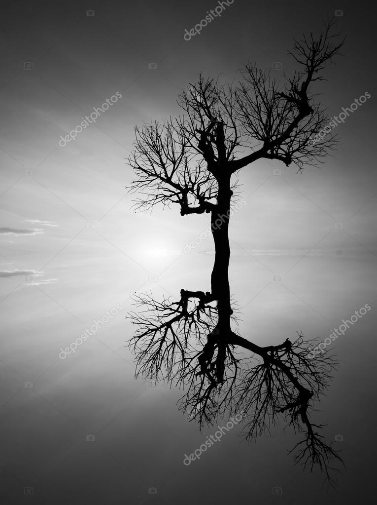 Reflection and silhouette of a dead tree in black and white