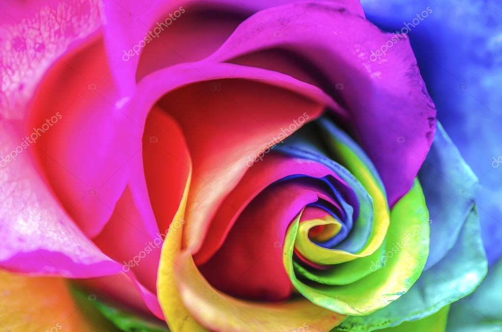 Rainbow Rose Close Up