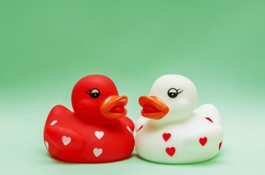 Ducks Lovers