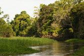 Ein Fluss und schönen Bäumen in einem Regenwald-peru