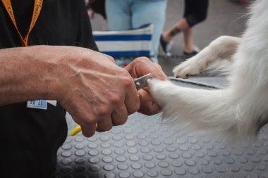 Man trimming dog's nails at Quattrozampeinfiera in Milan, Italy