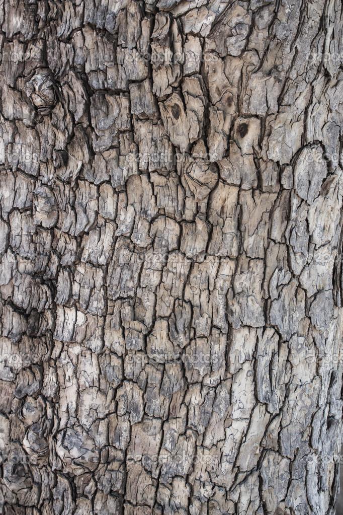 Tamarind tree bark texture