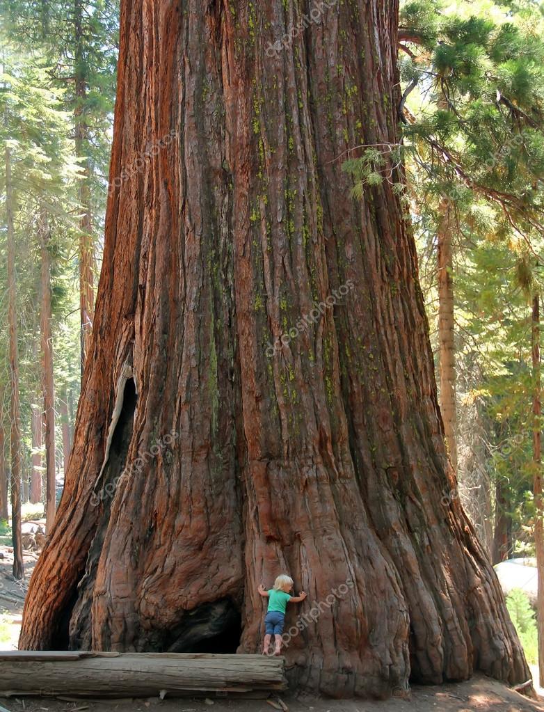 Girl hugging the giant sequoia