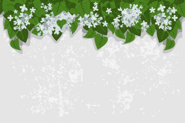 Grunge background with white lilacs