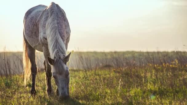 kůň krmení na trávě na horké letní slunce