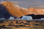 Northwest Fjord - Scoresbysund - Greenland
