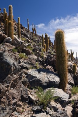 Atacama Desert - Chile - South America