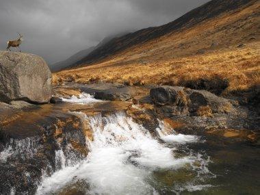 Stag in Glen Rosa - Isle of Arran - Scotland