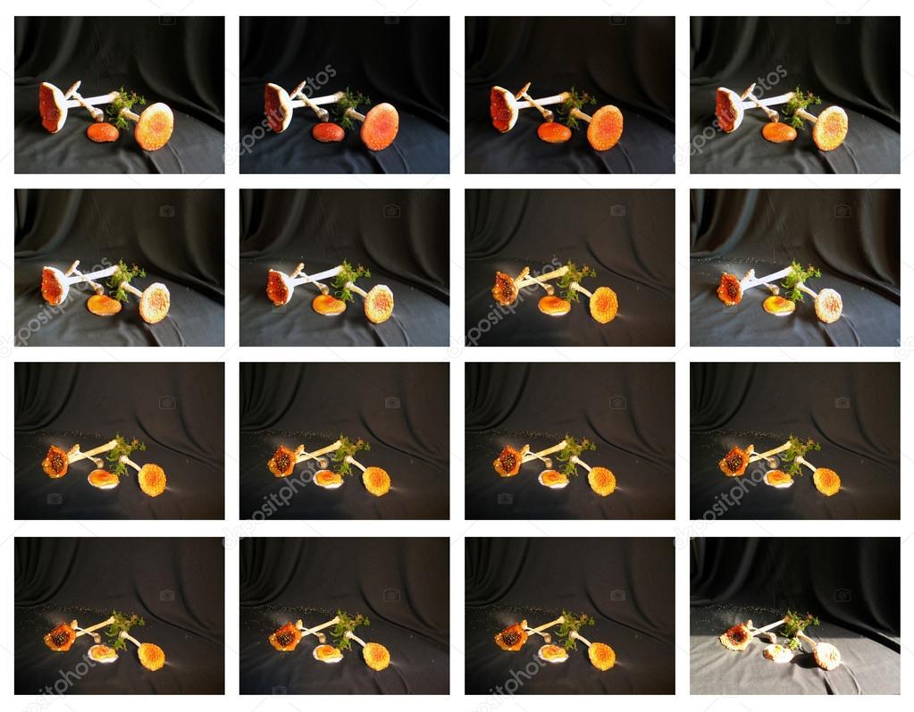 Pilz Pilze - eine Woche, um tote - 16 Bildern aus footage ...