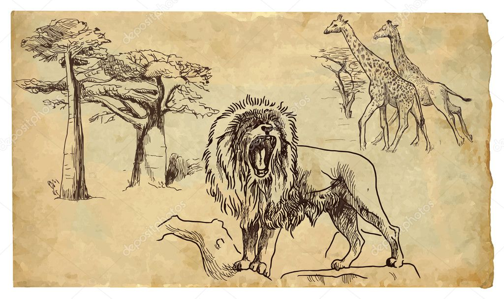 Lion, giraffes and baobabs
