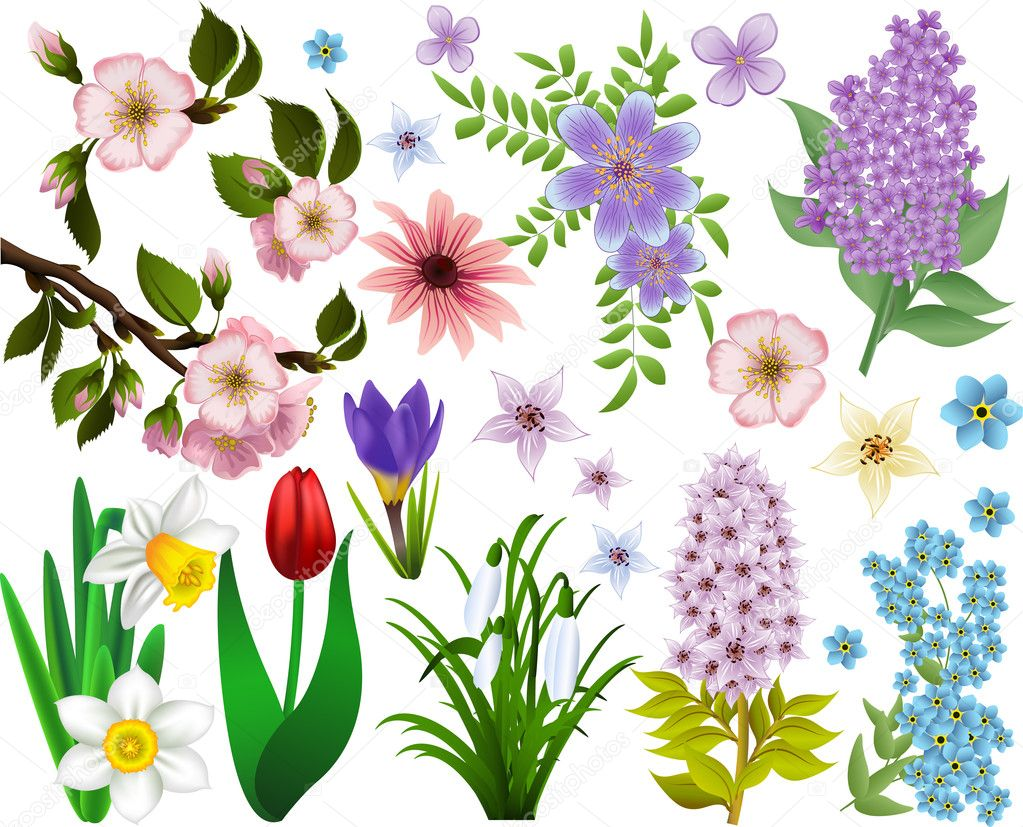 Collection of spring flowers. Raster version