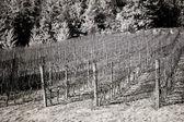 Fotografia vigneti, valle di willamette nellinfrarosso