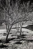 Fotografia sterile frutteti e vigneti, la valle di willamette
