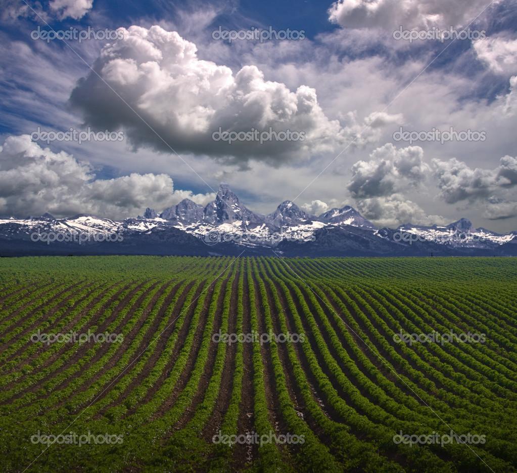 Fattoria usa montana foto stock rolffimages 29443131 for Piani di fattoria tedesca