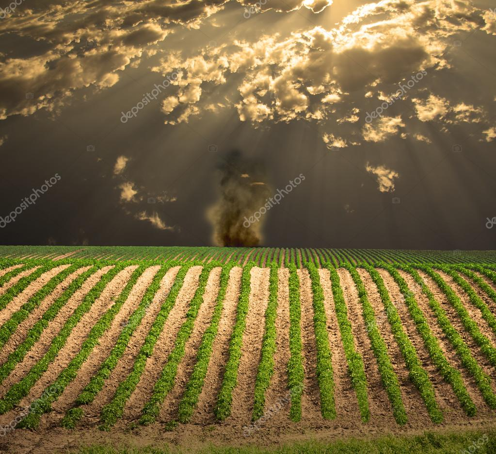 bauern-feld — stockfoto © rolffimages #34738691