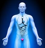 Medical Imaging - Male Organs - Bladder