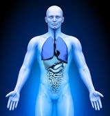 Medical Imaging - Male Organs - Lungs