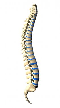 Spine Vertebrae - Lateral view Side view