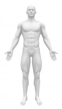 Blank Anatomy Figure - Front view