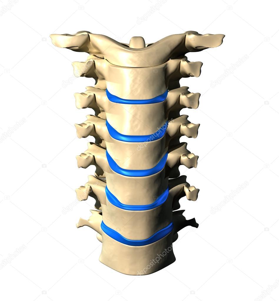 columna cervical - vista frontal anterior — Foto de stock © decade3d ...