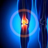 koleno - anatomie kostí