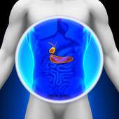 lékařské x-ray skenování - žlučník slinivka
