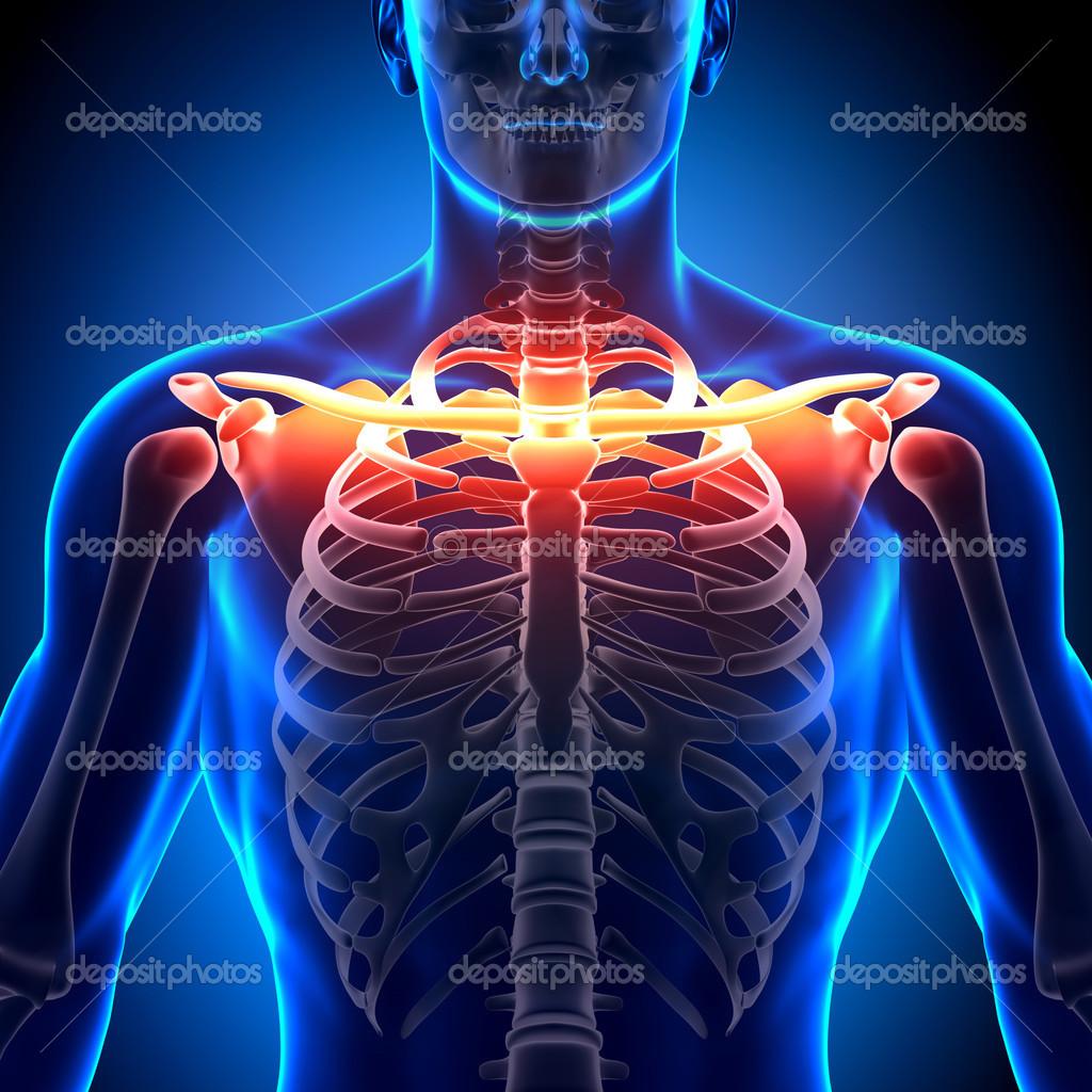 anatomía ósea de clavícula - huesos anatomía — Fotos de Stock ...