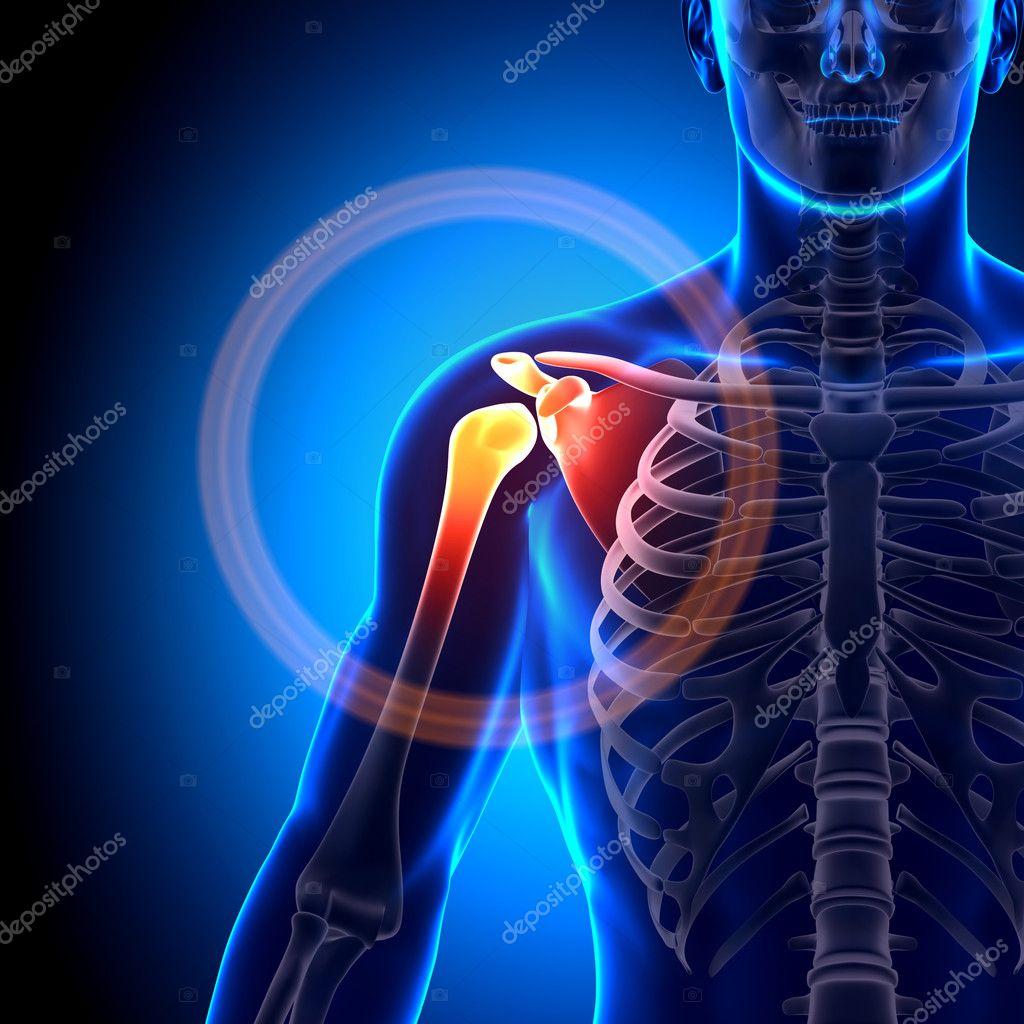 clavícula hombro escápula - huesos anatomía — Fotos de Stock ...