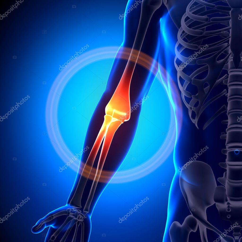Elbow Anatomy - Anatomy Bones — Stock Photo © decade3d #28193091