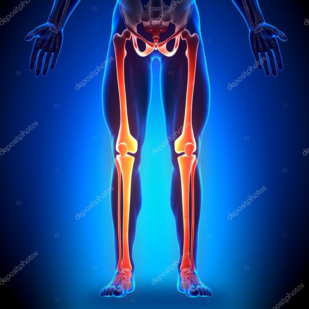 piernas - huesos anatomía — Foto de stock © decade3d #28193209