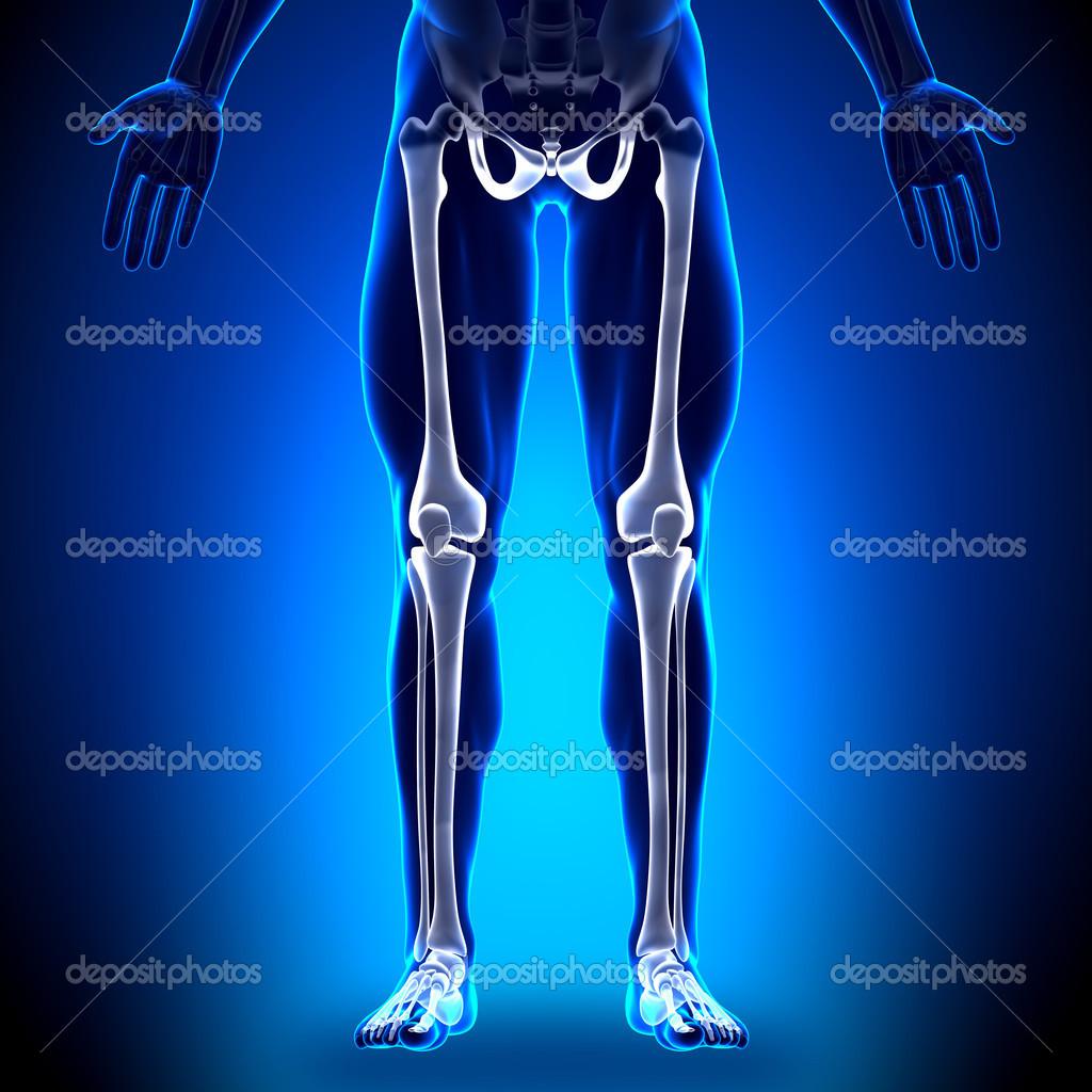 piernas - huesos anatomía — Foto de stock © decade3d #28193461