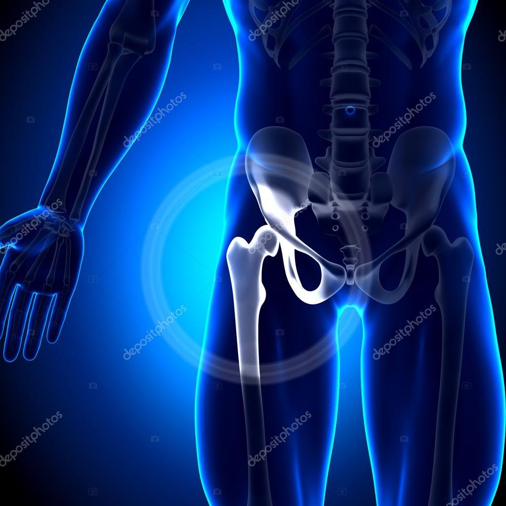 Hüftgelenk Femur - Knochen Anatomie — Stockfoto © decade3d #28193511