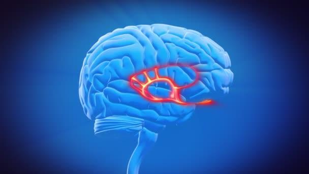 části mozku - limbický systém