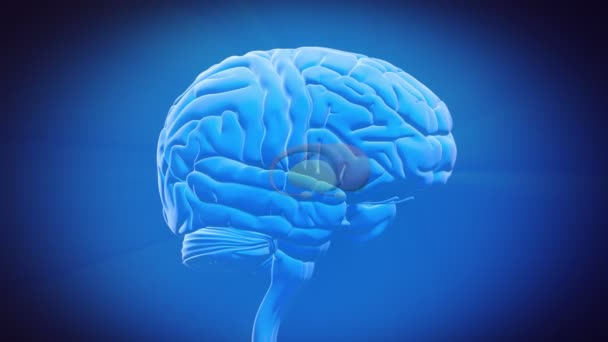 Brain parts separated stock video decade3d 35150037 brain parts separated stock video ccuart Gallery