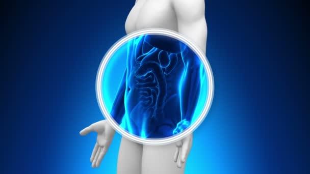 scansione a raggi x medici - budella