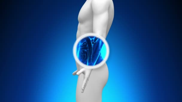 scansione a raggi x medici - reni