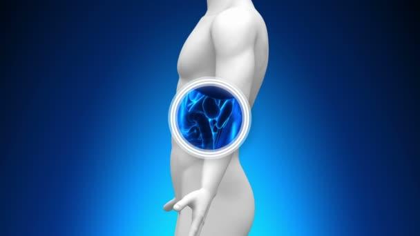 Medical X-Ray Scan - Spleen