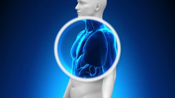 lékařské x-ray skenování - plíce
