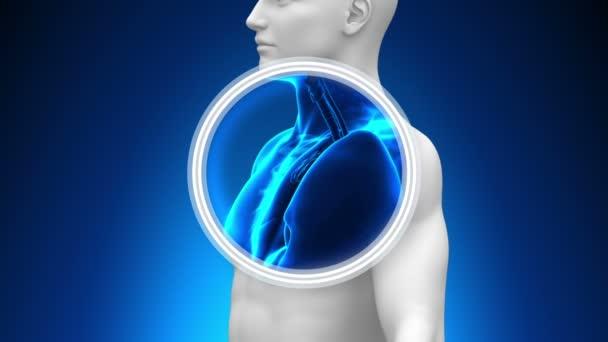 scansione a raggi x medici - timo